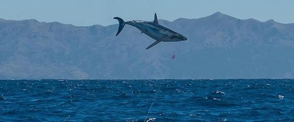 Trophy Shark Charters Image