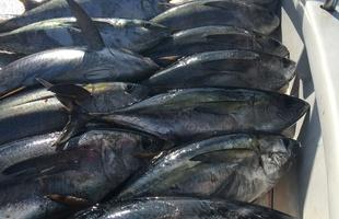 All kinds of fishing charters