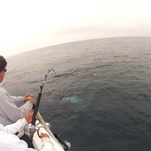250lb mako shark