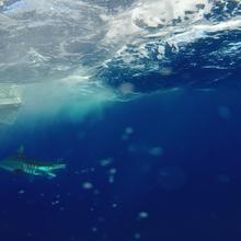cool under water shot of a mako shark